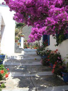 Beautiful passage in Greek island. Crete Greece, Santorini Greece, Mykonos, Beautiful Hotels, Beautiful Places, Beautiful Flowers, Skiathos Island, Santorini House, Greece Islands