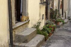 Italy castagneto carducci cat #italy #CastagnetoCarducci #cat