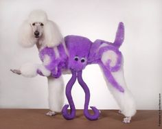Creative dog grooming No. Not creative. Just weird Poodle Grooming, Cat Grooming, Extreme Pets, Poodle Haircut, Creative Grooming, Dog Haircuts, Dog Hairstyles, Haircut Pictures, Crazy Dog