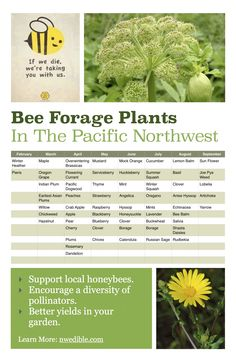 Truth time: if we don't start helping out our pollinator friends, our food prices and availability are going to suck. Do what you can to turn your little plot of land into a year-round refuge for bees. Here's a great chart to get you started; adapt for your region.
