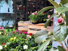 greenartstore- φυτοπωλείο- art decor