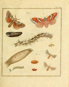 Vollständige Naturgeschichte der schädlichen Forstinsekten : - Biodiversity Heritage Library