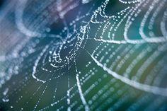 Image: Spiderweb (© ryasick/Getty Images)