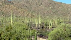 Family Fun In Tucson | Family Friendly Things To Do