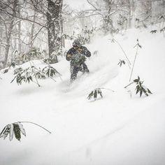 Niseko is delivering the Japow. 🇯🇵❄🤙🏼  @billyrob_90 at Annupuri. #loveniseko  📸 @jtpatts  .  .  .  #niseko #powder #powdersnow  #snowboarding #backcountry #offpiste #winterwonderland #snow #snowday #skibumzzz #loveniseko #hokkaido #japan #annupurivillage #grandhirafu #ニセコ #hanazono #nisekovillage #goshkionsen #ski  #moiwa #travelgram #powderlife #igs_asia #icu_japan #team_jp_東 #ig_japan Snowboarding, Skiing, Winter Wonderland, Powder, Asia, Japan, Videos, Instagram Posts, Travel