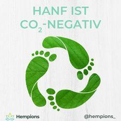 Nutzhanf wächst in nur 100 Tagen bis zu 4 m hoch und speichert dabei große Mengen an CO2. Dadurch, dass von Wurzel bis Blattspitze alle Teile der Pflanze sinnvoll weiterverwendet werden können ergibt sich eine negative CO2-Bilanz.  Wir Hempions setzen uns für mehr Nutzhanf auf den heimischen Feldern ein. #nachhaltig #growhemp #hanf