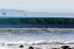 Kelp beds in the surf in Santa Barbara .