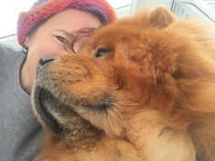 I love Chow Chow dogs!