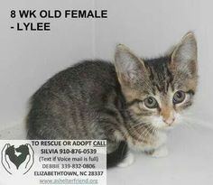 Emergency! BABY! Shelter overrun with cats/kittens. On euth list for tomorrow.Rescue,adopt,foster & please network!