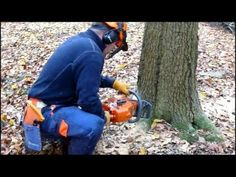 chainsaw course - felling an oak tree Chain Saw Art, Firewood Logs, Tree Felling, Rough Wood, Wood Shed, One Tree, Outdoor Projects, Chainsaw, Pose Reference