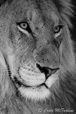 Wildlife photos for sale by Craig McFarlane: Professional Wildlife Photographer: Professional Wildlife Potographs for sale. Wildlife, birds, creative, b&w, macro photographs Photos For Sale, Pta, Professional Photographer, South Africa, Photographs, Wildlife, Canvas Prints, Birds, Creative