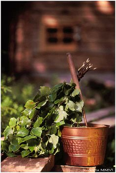 vihta, vasta is used in traditional sauna-bathing for massage and stimulation of the skin. Scandinavian Saunas, Meanwhile In Finland, Portable Steam Sauna, Birch Branches, Birch Trees, Natural Swimming Pools, Natural Pools, Finnish Words, Traditional Saunas