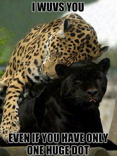 More funny Animal Memes