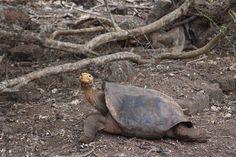 Galapagos Island of Santa Cruz - What are you looking at?