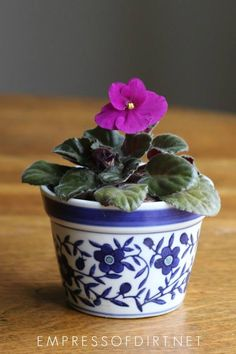 to Grow African Violets from Leaf Cuttings Tips for growing African violets from cuttings indoors for more of your favorite flowering houseplants.Tips for growing African violets from cuttings indoors for more of your favorite flowering houseplants. Vegetable Garden Planner, Vegetable Garden For Beginners, Backyard Vegetable Gardens, Gardening For Beginners, Gardening Tips, Hydroponic Gardening, Organic Gardening, Indoor Gardening, Organic Plants