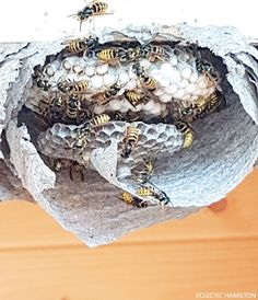 a wasp nest found in our loft natures paper makers pinterest in wasp and nests. Black Bedroom Furniture Sets. Home Design Ideas