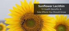Sunflower lecithin and soy are well-known lecithinsupplements. The lecithin is naturally produced and extracted from the plant.