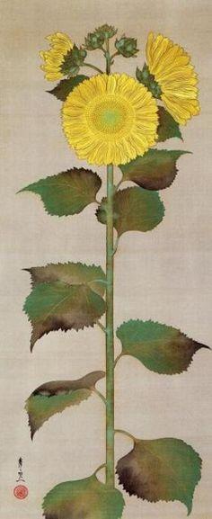 Suzuki Kiitsu(鈴木其一 Japanese, 1796-1858)  Sunflower  向日葵図