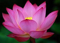 Cancer Patient: Falun Dafa Saved Me Again!