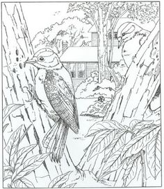 Coloring page Nature around the house Nature around the house on Kids-n-Fun.co.uk. On Kids-n-Fun you will always find the best coloring pages first!