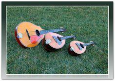 Mandocello, Mandola, and Mandolin in the Grass. #Mandolin #Mandola #Mandocello