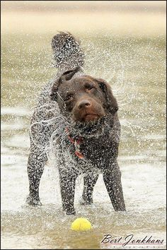 dogs ✿ wet dogs by sea shaking water playing in the rain
