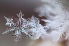 20 Majestic Close-Up Pictures of Snowflakes - The Photo Argus Snowflake Photography, Macro Photography Tips, Micro Photography, Motion Photography, Double Exposure Photography, Space Photography, Levitation Photography, Experimental Photography, Close Up Photography