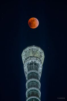 Japanese Tree, Japan Landscape, Tokyo Skytree, Moon Pictures, Japanese Architecture, Pinterest For Business, Tokyo Japan, Just Amazing, Cool Photos