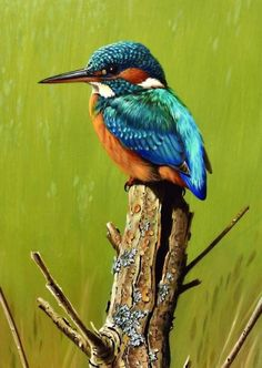GLORIOUS: Paintings of several kingfishers can be found in his biography, says Terance Bond, & no justification is required as I simply love painting them& Wildlife Paintings, Wildlife Art, Beautiful Birds, Animals Beautiful, Kingfisher Bird, Kingfisher Tattoo, Mosaic Animals, 3d Drawings, Animal Decor