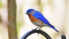 Meet your fine feathered friends: How bird-watching may help you de-stress Merlin Bird, Audubon Society, Mental And Emotional Health, Go Outdoors, Bird Species, Bird Watching, How To Better Yourself, Natural World, Meet You