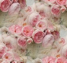 Pin by Debbie Orcutt on Everything's coming up roses ♥ | Pinterest)