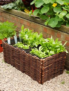 DIY instructions for growing salad greens in a container. Salad greens, like lettuce and spinach, grow quickly, and when you cut them, new ones form. Instead of sowing several seeds at the same time, plant a row every two weeks to provide a steady supply. Salad greens grow in full sun and most soil types are suitable. The seeds germinate in 1 week and the leaves are ready to harvest from 3 weeks.