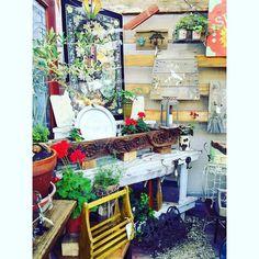 #jasminesgarden #jasminesgardentreasures #oldtowntemecula #antiques #plants #flowers #gardendecor #homedecor by _jasminesgarden