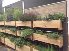 Wall of herb planter boxes. Monterrey Cafe in Auckland, New Zealand