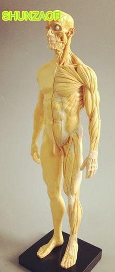 Cmam Skull04 Human Skeleton Fetal Skull Baby Infant Anatomy Model