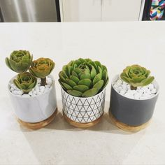 Kitchen canisters make a great succulent garden idea!