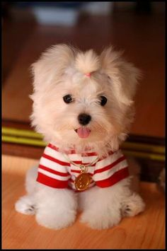 Image detail for -Dog Hairstyles | Cute Pets - ... | Dog cloths and...