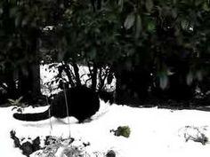 funny cat under snow