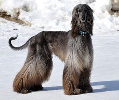 If you have asthma, or don't like the thought of every item of clothing you own being covered in fur, there are certain breeds that moult less, or not at all.