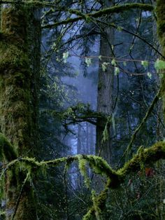 ecocides:  The Forest Surreal |image bychamois-shimi