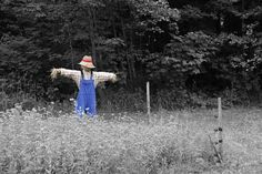The Scarecrow Went Walking