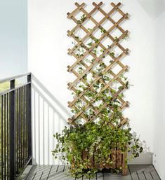 Askholmen by IKEA  Hide the ugly, crappy fences with climbers