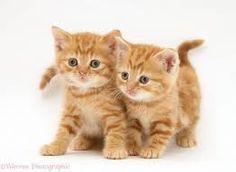 Afbeeldingsresultaat voor kittens achtergrond