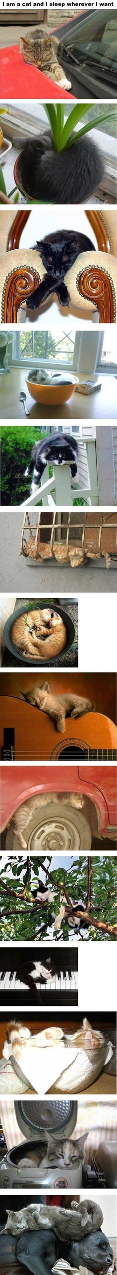 Im a cat and I sleep wherever I want....this is for you sam...my fav is the one in the cereal bowl!