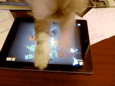 Cat plays fruit ninja on ipad.   (Click on the Image to Play)
