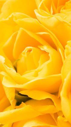 Yellow Roses http://www.verycoolphotoblog.com/