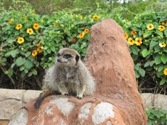 #wildlife #wildlifephotography #southafricanwildlife #amateurphotography #meerkat #butterflyworld