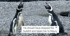 cool This Video Of A Home-Wrecking Penguin Just Broke The Internet And Our Hearts