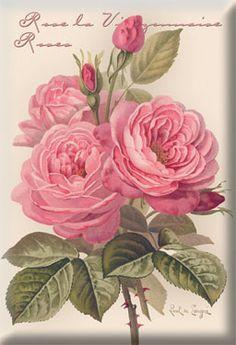 """Rose la Vierzonnaise"" - Paul DeLongpre  OOh, you are wonderful, Paul! ....Linda"