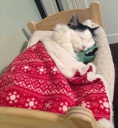 Elle va vous faire craquer : faites la rencontre de Sophie, le chat qui dort dans un petit lit de poupée